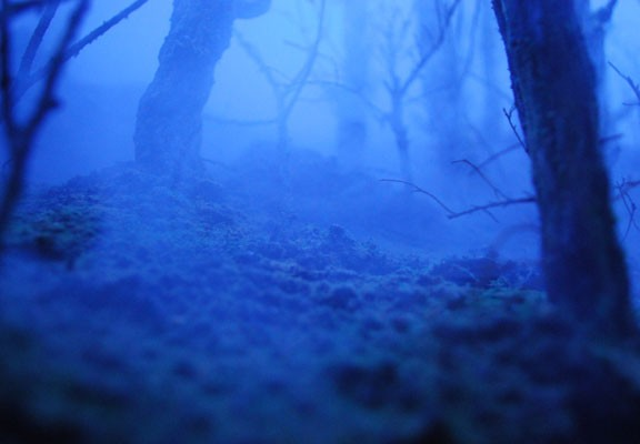 and the colour of the night, Aimee Fairman 2007
