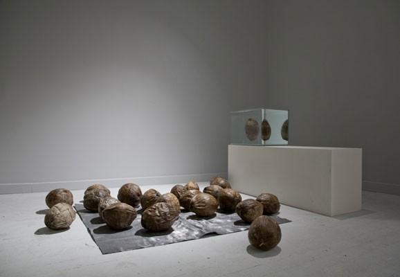 Bikini Atoll Containment II (Equilibrium), Studio Markus Hoffmann, 20 contaminated coconuts from the bikini atoll, Blok Art Space Istanbul, 2016